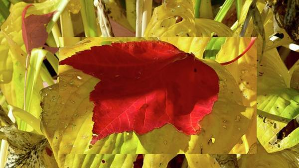 Photograph - Autumn Leaf Collage by Jerry Sodorff