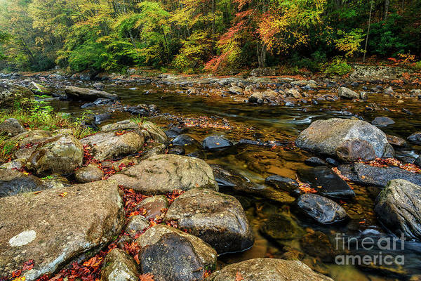 Photograph - Autumn Rain Along Williams River by Thomas R Fletcher