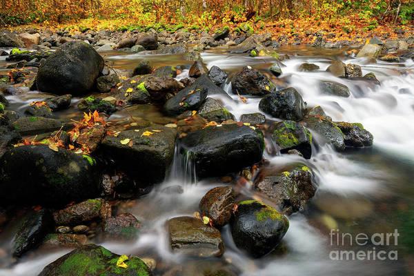 Wall Art - Photograph - Autumn Rush by Mike Dawson