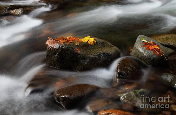 Wall Art - Photograph - Autumn Suspended by Mike Dawson