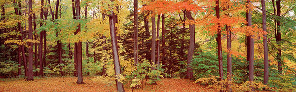 Wall Art - Photograph - Autumn Trees In A Forest, Chestnut by Panoramic Images
