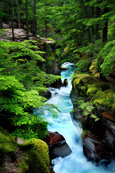 Photograph - Avalanche Creek Waterfalls by David Chasey