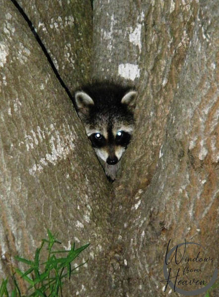Photograph - Baby Raccoon And Jesus by Matthew Seufer