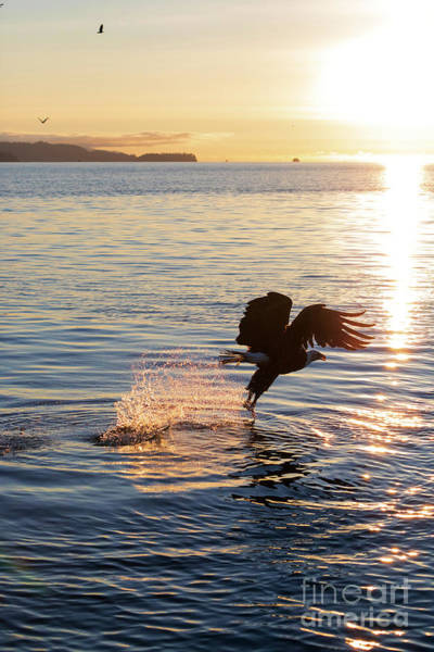 Wall Art - Photograph - Bald Eagle At Sunset by Louise Heusinkveld