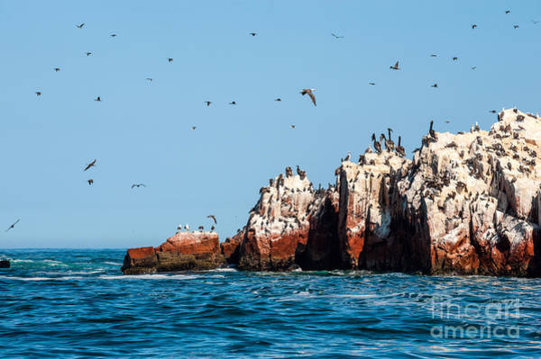 Wall Art - Photograph - Ballestas Islands, Paracas National by Ksenia Ragozina