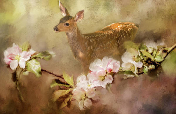 Photograph - Bambi by Marilyn Wilson
