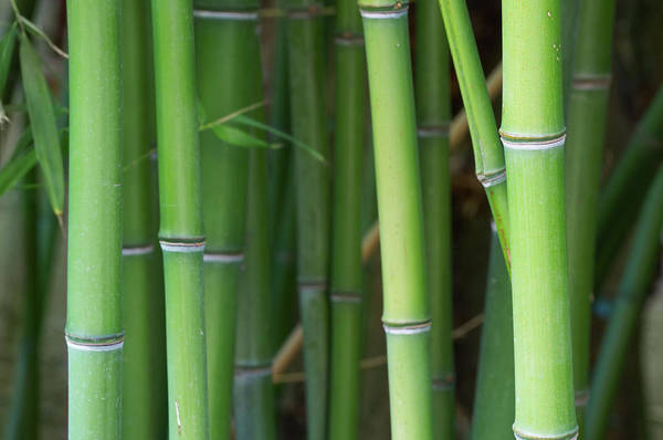 Residential Area Photograph - Bamboo Forest by Sandsun