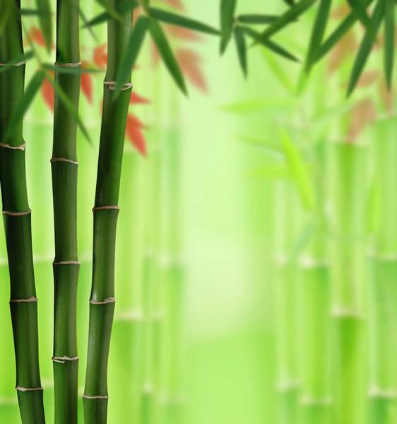Wall Art - Photograph - Bamboo Land by Pixhook