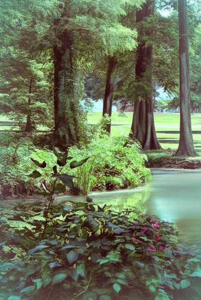 Photograph - Bank Of Reelfoot Lake by Bonnie Willis