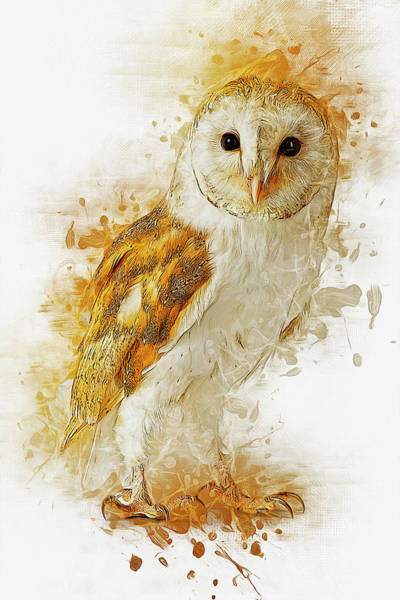 Digital Art - Barn Owl by Ian Mitchell