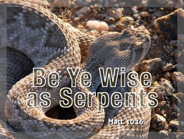 Photograph - Be Ye Wise As Serpents by Judy Kennedy