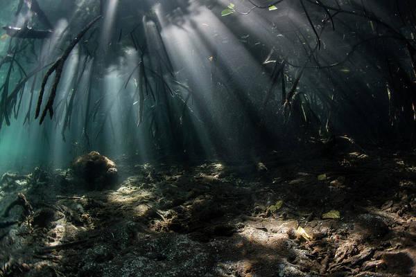 Photograph - Beams Of Sunlight Pierce The Shadows by Ethan Daniels