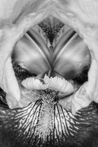 Photograph - Bearded Iris Flower Up Close by Susan Candelario