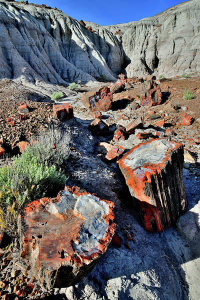Photograph - Beautiful Petrified Wood In Jasper Forest by Ray Mathis