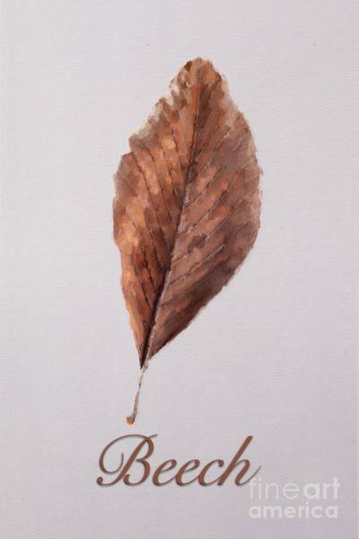 Wall Art - Painting - Beech Leaf by John Edwards