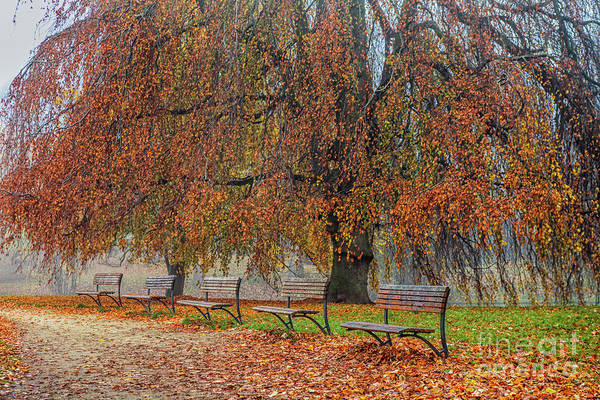 Wall Art - Photograph - Benches In Autumn Park by Patricia Hofmeester