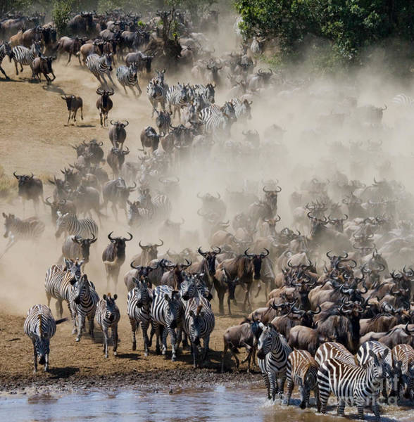 Wall Art - Photograph - Big Herd Of Wildebeest Is About Mara by Gudkov Andrey