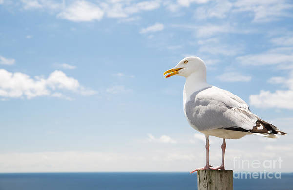 Wall Art - Photograph - Birds And Wildlife Concept - Seagull On by Syda Productions