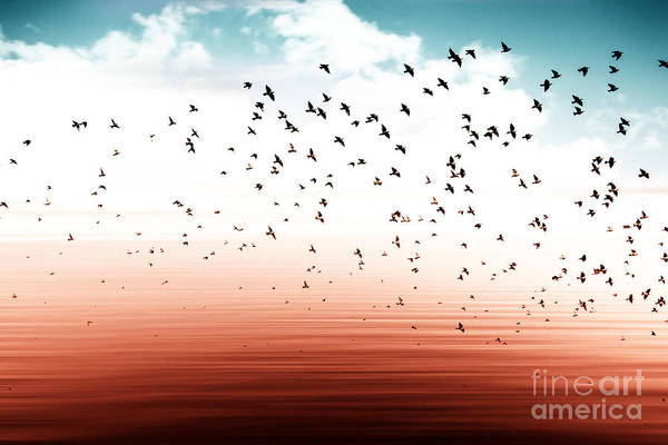 Wall Art - Photograph - Birds Flying And Abstract Sky ,spring by Babaroga