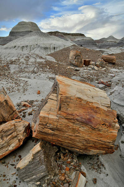 Photograph - Blue Mesa Petrified Wood by Ray Mathis