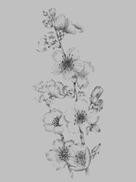 Love Mixed Media - Blush Pink Flower Drawing I by Naxart Studio