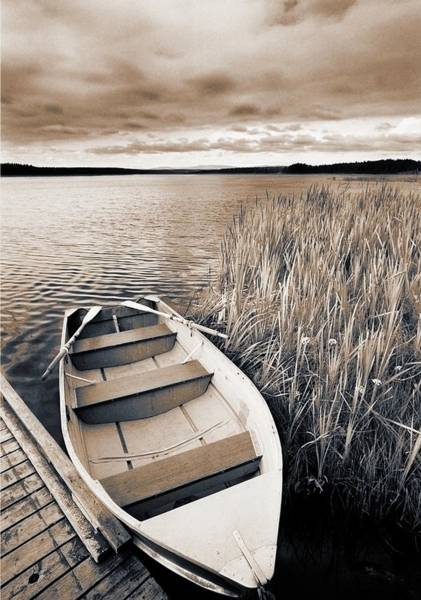 Family Time Wall Art - Photograph - Boat And Reeds, Burntstick Lake by Darwin Wiggett