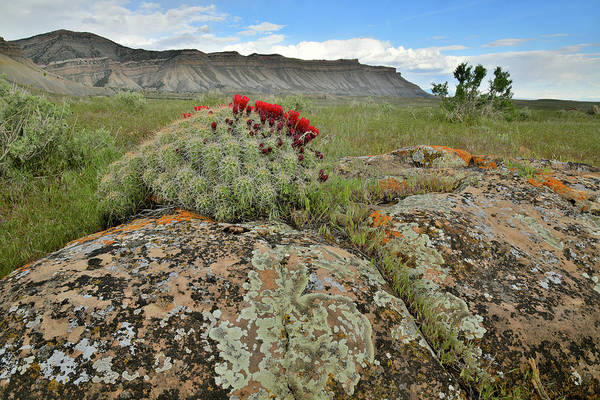 Photograph - Book Cliffs Boulders And Blooms by Ray Mathis