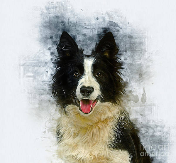 Digital Art - Border Collie by Ian Mitchell