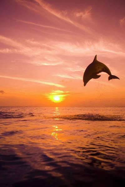 Carefree Photograph - Bottlenose Dolphin Tursiops Truncatus by Rene Frederick