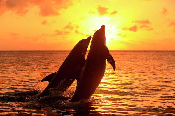 Roatan Photograph - Bottlenose Dolphins by Tier Und Naturfotografie J Und C Sohns