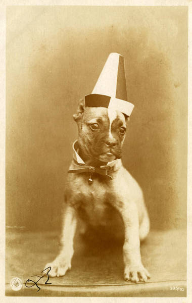 Humor Photograph - Boxer Puppy Wearing Funny Hat by Graphicaartis