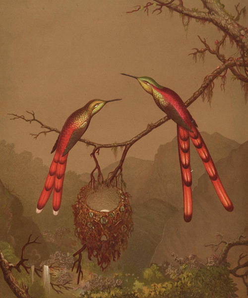 Rufous Hummingbird Wall Art - Painting - Brazilian Hummingbirds by Martin Johnson Heade