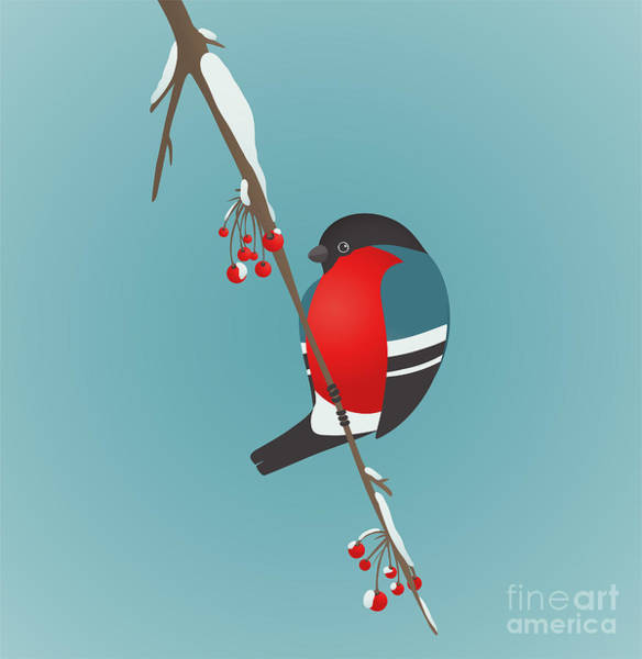 Wall Art - Digital Art - Bullfinch Sitting On Ashberry Twig by Popmarleo