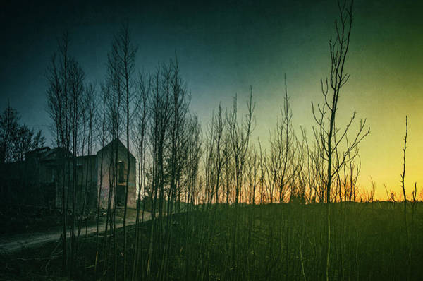 Wall Art - Photograph - Burnt Land by Carlos Caetano
