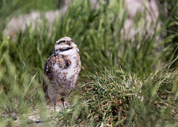 Photograph - Burrowing Owl by Michael Chatt