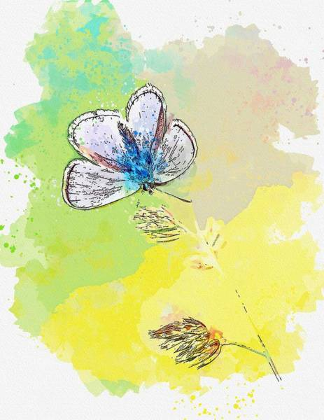 Wall Art - Painting - Butterfly -  Watercolor By Adam Asar by Adam Asar