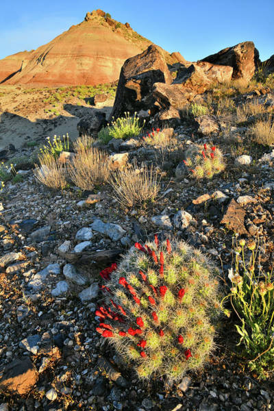 Photograph - Cacti Bloom On Ruby Mountain by Ray Mathis