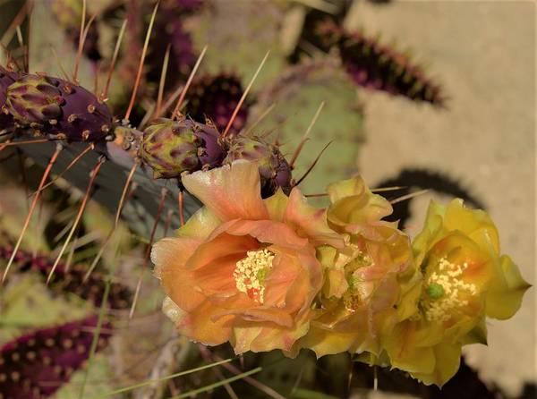 Wall Art - Photograph - Cactus Flower by John R Williams