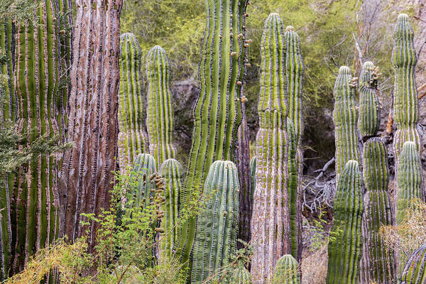 Wall Art - Photograph - Cactus Landscape by Tom Norring