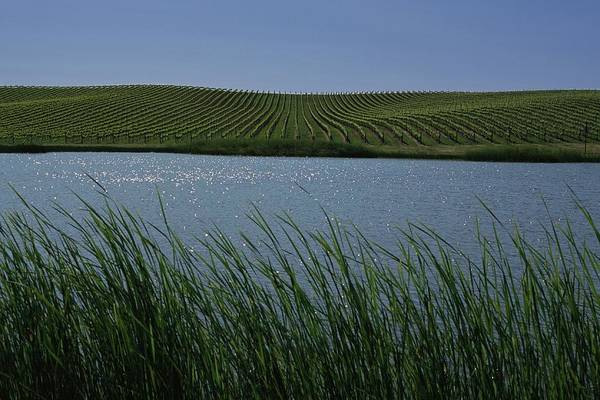 Sonoma County Photograph - Californias Wine Growing Region Of by George Rose