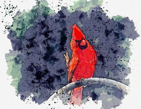 Wall Art - Painting - cardinal bird -  watercolor by Ahmet Asar by Ahmet Asar