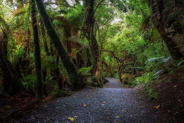 Te Waipounamu Wall Art - Photograph - Catlins Forest Park - New Zealand by Joana Kruse