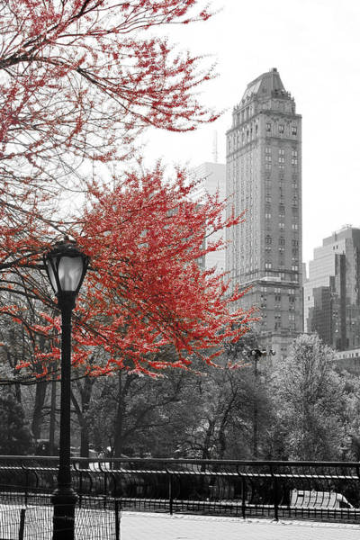 Wall Art - Photograph - Central Park With Red Tree by Emily Navas
