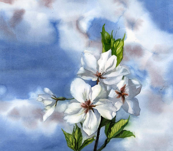 Painting - Cherry Blossom Time by Alfred Ng