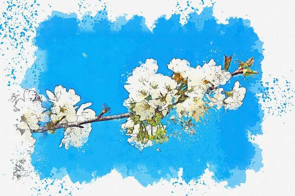 Wall Art - Painting - Cherry Flower Sprig Spring Nature Spring Flowers 3 -  Watercolor By Adam Asar by Adam Asar