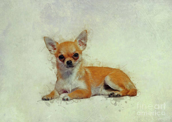 Drawing - Chihuahua Art by Ian Mitchell