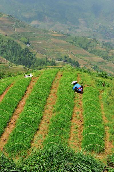 Farm Photograph - China, Guangxi Province, Longsheng by Mattes René / Hemis.fr