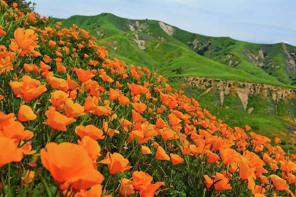 Photograph - Poppies Chino Hills by Kyle Hanson