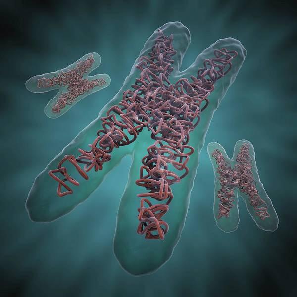 Square Digital Art - Chromosomes, Artwork by Science Photo Library - Andrzej Wojcicki