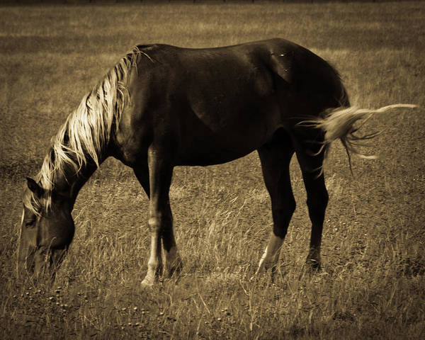 Photograph - Cimarron by Catherine Sobredo